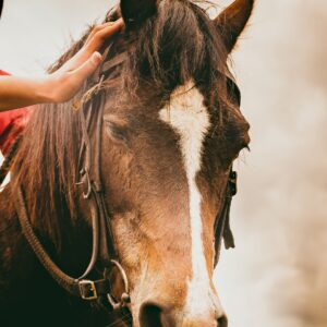 Equine Assisted personal development and learning